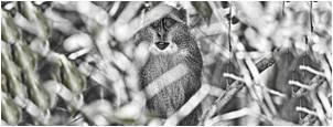 tn animal-cognition monkey