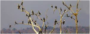 tn board-advisors birds