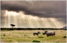 tn conservation rhinos