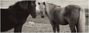 tn contact horses