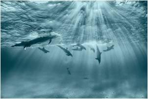tn pledge dolphins