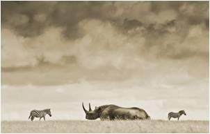 tn summit-objectives rhinos