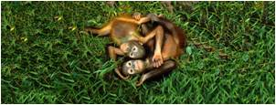 tn support-us orangutan babies