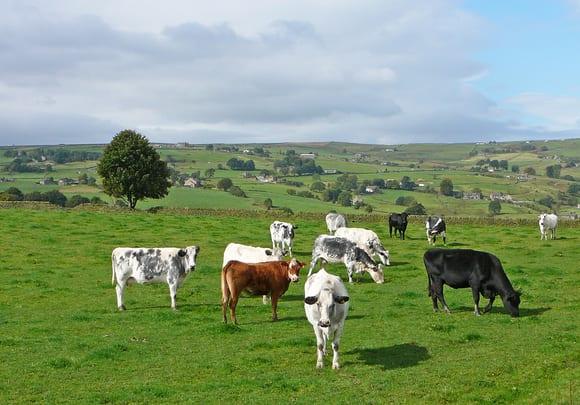 Thinking Livestock